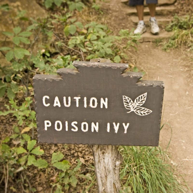 Always be on the lookout for poison ivy or other poisonous plants here in Newark, DE.